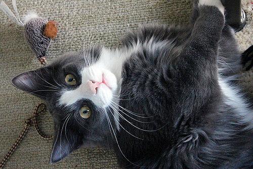 Spiele Für Katzen Online