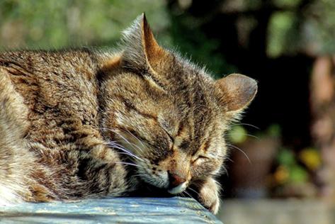 Alte katze frisst nicht mehr
