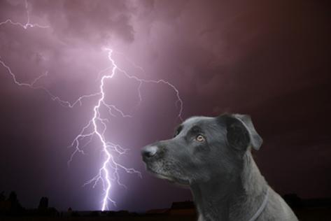 Angst vor menschen hund