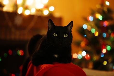 Artgerechte Weihnachtsgeschenke Für Ihre Geliebten Haustiere